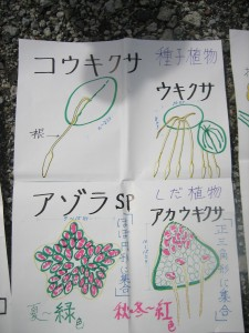 種子植物とシダ植物